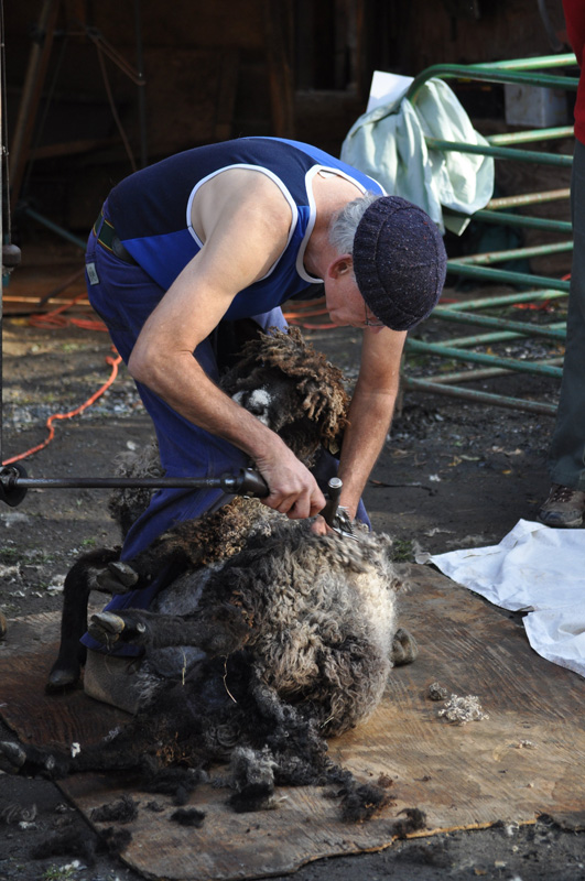 Jim McRae, sheep shearer, vermont sheep & wool festival